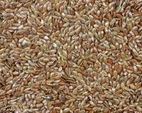 Купить семена Льна обыкновенного 1кг (также используется в лекарственных целях)