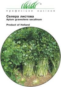 Сельдерей листовой 0,5г - купить семена (Голландские семена)