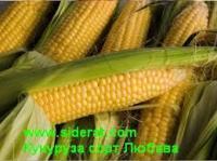 Купить семена кукурузы сорт Любава 1 кг