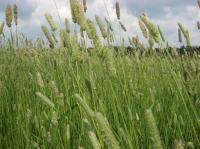 Купить травосмесь сенокосная №1для сенокоса 1кг