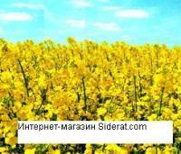 Семена рапса озимого на сидерат 1 кг ( Обогащает почву серой и фосфором)