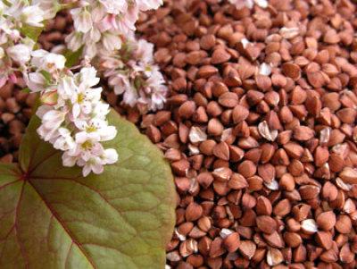 купить семена Гречихи (сидерат-фитосанитар) 1кг