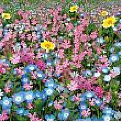 Купить Семена газонной травы «Цветущий Город»-до 20см 30г