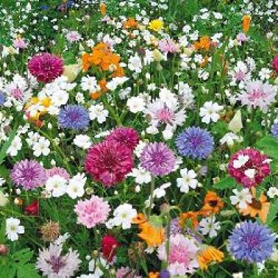 Купить семена газонной травы «Эко-Магистраль» 30г