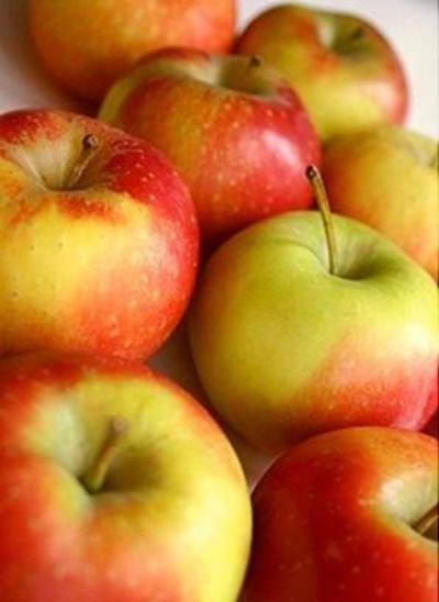 Саженцы яблони Топаз 1шт