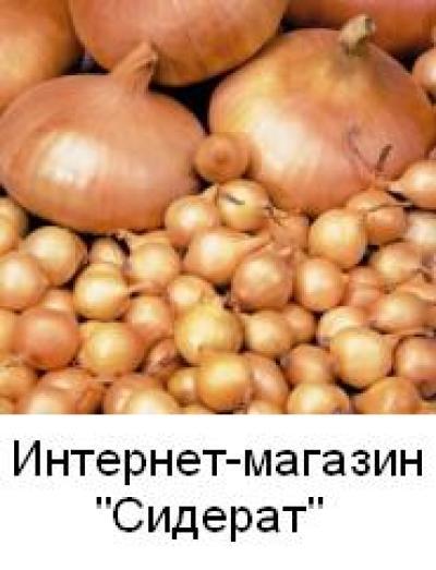 Продам лук-севок сорт Штутгартен ризент 1 кг