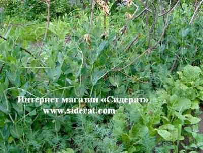 Совместные посадки поднимают урожайности и не приводят к истощениям почвы