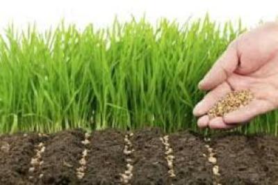 Какой сидерат выбрать для посева?